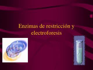 Enzimas de restricción y electroforesis