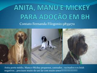 ANITA, MANU E MICKEY PARA ADOÇÃO EM BH