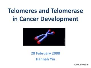 Telomeres and Telomerase in Cancer Development