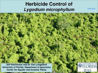 Herbicide Control of Lygodium microphyllum