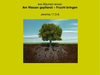 v on Bäumen lernen Am Wasser gepflanzt – Frucht bringen Jeremia 17,5-8
