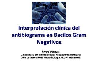 Interpretación clínica del antibiograma en Bacilos Gram Negativos
