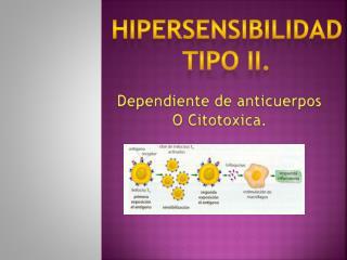 HIPERSENSIBILIDAD TIPO ii.