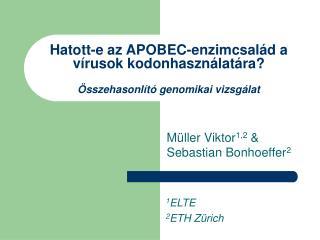 Hatott-e az APOBEC-enzimcsalád a vírusok kodonhasználatára? Összehasonlító genomikai vizsgálat
