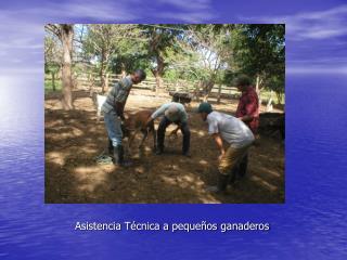 Asistencia Técnica a pequeños ganaderos