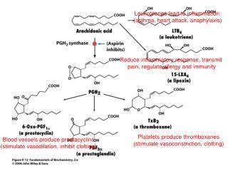 Platelets produce thromboxanes stimulate vasoconstriction, clotting