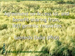 Agreement on Access to, and Benefit-sharing from,  Teff  genetic resources Gemedo Dalle (PhD)