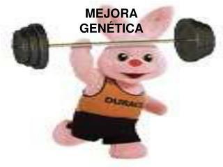MEJORA GENÉTICA