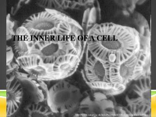 The Inner Life of a Cell