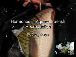 Hormones in Aquacultre/Fish Reproduction