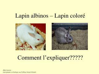 Lapin albinos   Lapin color