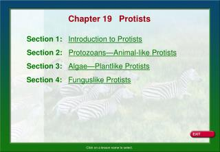 Chapter 19   Protists