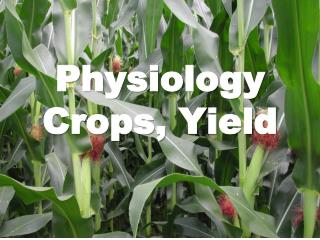 Physiology Crops, Yield