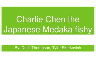 Charlie Chen the Japanese Medaka fishy