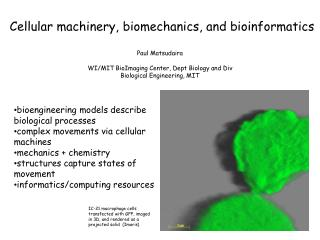 Paul Matsudaira WI/MIT BioImaging Center, Dept Biology and Div Biological Engineering, MIT