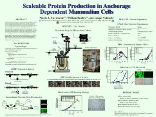 Scaleable Protein Production in Anchorage Dependent Mammalian Cells