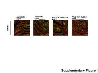 AAV9-CMV- EGFP miR122(3x)TS