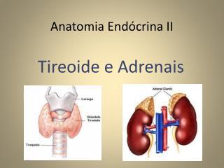 Anatomia Endócrina II