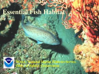 Essential Fish Habitat