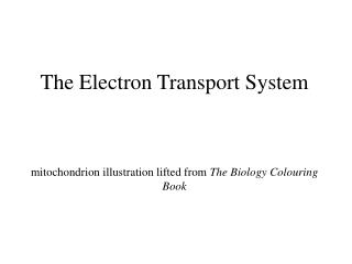 The Electron Transport System mitochondrion illustration lifted from  The Biology Colouring Book