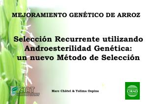 MEJORAMIENTO GENÉTICO DE ARROZ