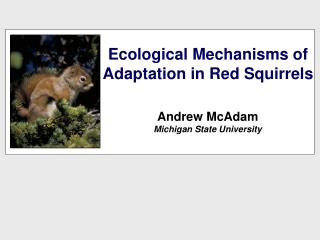 Ecological Mechanisms of Adaptation in Red Squirrels