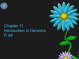 Chapter 11 Introduction to Genetics P. 64