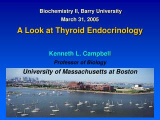 Biochemistry II, Barry University March 31, 2005 A Look at Thyroid Endocrinology