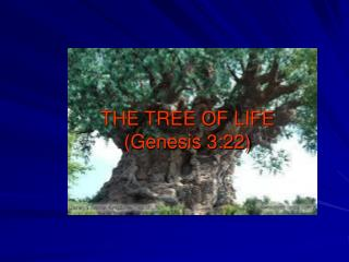 THE TREE OF LIFE (Genesis 3:22)
