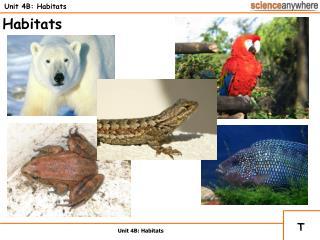 Unit 4B: Habitats