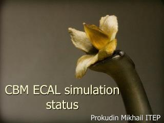 CBM ECAL simulation status