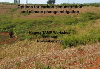 Options for carbon sequestration and climate change mitigation