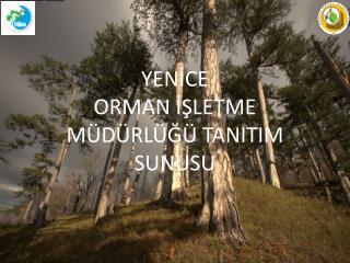 YENİCE ORMAN İŞLETME MÜDÜRLÜĞÜ TANITIM SUNUSU