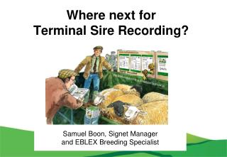 Where next for  Terminal Sire Recording?