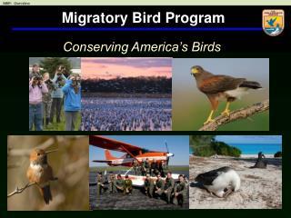 Migratory Bird Program