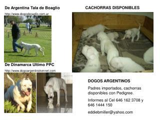 De Argentina Tala de Boaglio dogosboaglio.ar