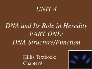 UNIT 4 DNA and Its Role in Heredity PART ONE: DNA Structure/Function