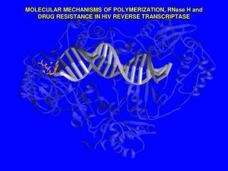 MOLECULAR MECHANISMS OF POLYMERIZATION, RNase H and  DRUG RESISTANCE IN HIV REVERSE TRANSCRIPTASE