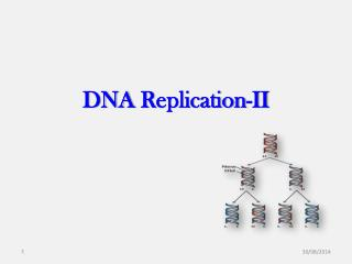 DNA  R eplication -II