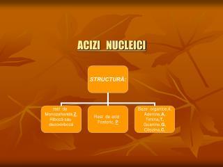 ACIZI   NUCLEICI