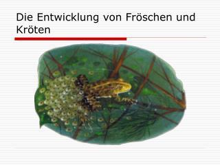Die Entwicklung von Fröschen und Kröten