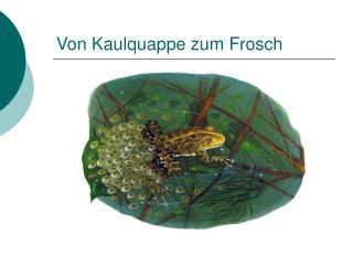 Von Kaulquappe zum Frosch