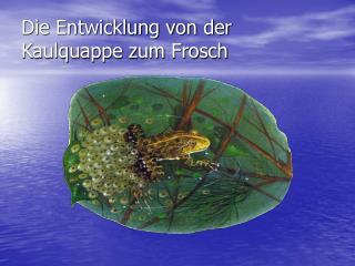 Die Entwicklung von der Kaulquappe zum Frosch