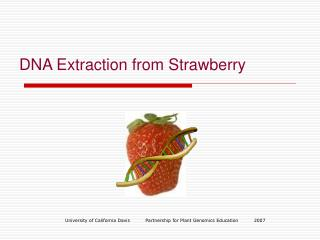 DNA Extraction from Strawberry
