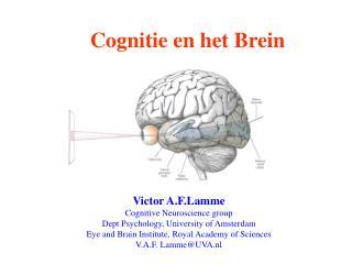 Cognitie en het Brein