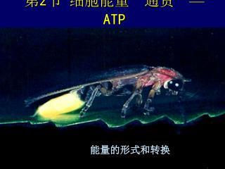 """第 2 节 细胞能量 """" 通货 """" — ATP"""