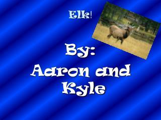 Elk !