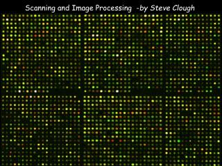 Scanning and Image Processing  - by Steve Clough