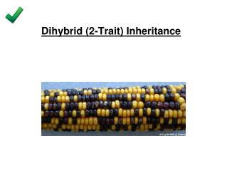 Dihybrid (2-Trait) Inheritance