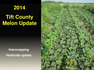 2014 Tift County Melon Update